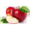 شستوشوی سیب برای تولید سیب خشک
